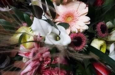 Flori pentru sentimente